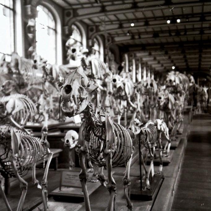 Skelethaven, Paris